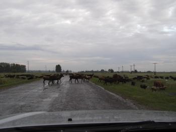 Рано утром пересекли границу
